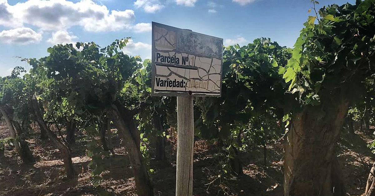 finca-10ha-uvas-varietales