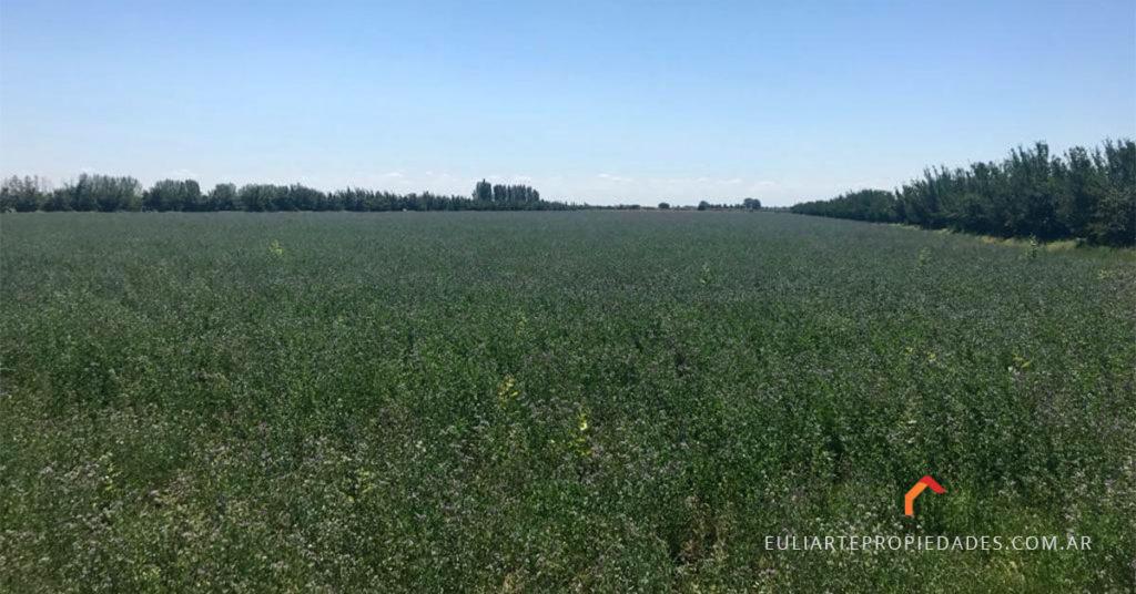 finca-alfalfa-carmensa-1