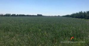 finca de alfalfa carmensa